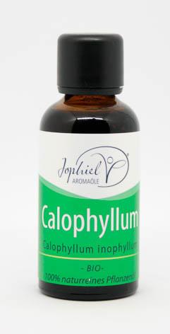Calophyllum Öl Bio 50 ml